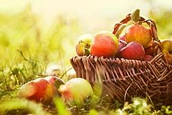 Apfel Informationen und Kalorien / Nährwerte