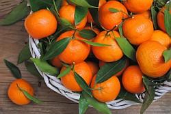 Clementine Informationen und Kalorien / Nährwerte