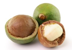 Macadamia Nuss