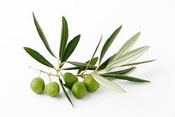 Oliven Informationen und Kalorien / Nährwerte